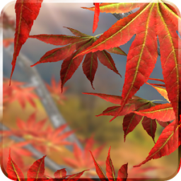 Autumn Tree Free Wallpaper App by Kittehface Software